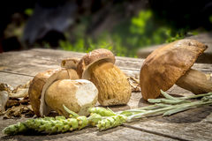 Boletus Edilus mushrooms on a wooden table  – fresh and dried Royalty Free Stock Photography