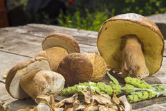 Boletus Edilus mushrooms on a wooden table  – fresh and dried Stock Photography