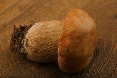 boletus edulis δασικός s σκίουρος ψωμιού Στοκ φωτογραφία με δικαίωμα ελεύθερης χρήσης