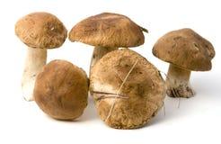 Boletus edulis. Five mushrooms on white background stock photography