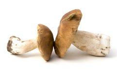 Boletus edulis. Two mushrooms on white background royalty free stock photography