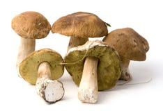 Boletus edulis. Five mushrooms on white background royalty free stock photos