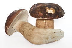 Boletus edulis (aereus) Royalty Free Stock Photo