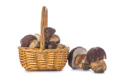 Boletus edulis in a basket isolated on white Stock Image