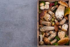 Boletus edulis, cepe, porcini mushrooms unwashed on gray concret Stock Photo