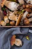 Boletus edulis, cepe, porcini mushrooms unwashed on gray concret Stock Photography