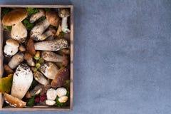 Boletus edulis, cepe, porcini mushrooms unwashed on gray concret Royalty Free Stock Photos