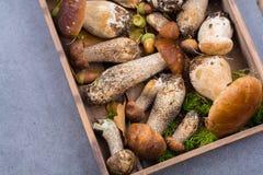 Boletus edulis, cepe, porcini mushrooms unwashed on gray concret Royalty Free Stock Images