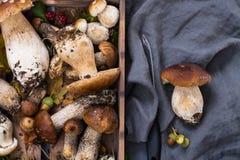 Boletus edulis, cepe, porcini mushrooms unwashed on gray concret Stock Photos
