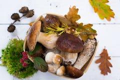 Boletus edulis, cepe, porcini mushrooms unwashed on white wooden Stock Images
