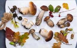 Boletus edulis, cepe, porcini mushrooms unwashed on white wooden Stock Photo