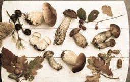 Boletus edulis, cepe, porcini mushrooms unwashed on white wooden Royalty Free Stock Images