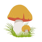 Boletus edulis, edible forest mushrooms. Colorful cartoon illustration Stock Photo