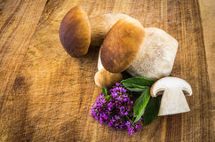 Boletus edulis Royalty Free Stock Images