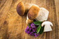 Boletus edulis. Fresh mushrooms on a chopping board with herbs, boletus edulis Royalty Free Stock Images