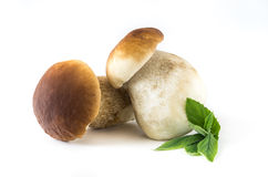 Boletus edulis. Fresh mushrooms on a white background, , Boletus edulis Royalty Free Stock Images