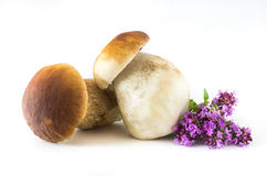 Boletus edulis. Fresh mushrooms on a white background, , Boletus edulis Royalty Free Stock Photos