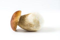 Boletus edulis. Fresh mushrooms on a white background, , Boletus edulis Stock Photos