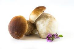 Boletus edulis. Fresh mushrooms on a white background, , Boletus edulis Stock Image
