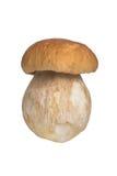 The boletus edulis isolated on white background Stock Images