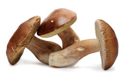 Boletus edulis isolated on white background. Wild Stock Photos