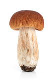 Boletus edulis king bolete isolated on white background. Stock Photo