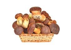 Boletus edulis mushroom in basket Stock Image