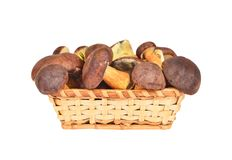 Boletus edulis mushroom in basket Royalty Free Stock Images