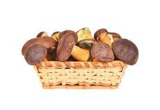 Boletus edulis mushroom in basket Royalty Free Stock Images