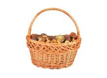 Boletus edulis mushroom in basket Royalty Free Stock Photography