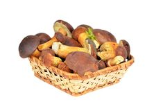 Boletus edulis mushroom in basket, DOF Stock Photo