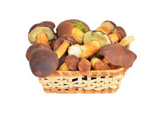 Boletus edulis mushroom in basket, DOF Stock Photography