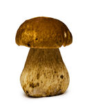 Boletus Edulis mushroom Royalty Free Stock Photos