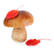 Boletus Edulis mushroom Royalty Free Stock Image