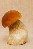 Boletus edulis mushroom on table cloth. Boletus edulis mushroom on rustic table cloth background Stock Images