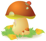 Boletus edulis mushroom. Vector illustration of mushroom boletus edulis Stock Photos