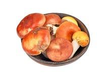 Boletus edulis mushroom in vintage clay bowl Stock Image