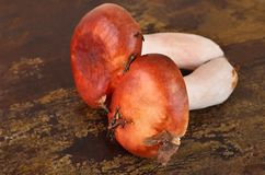 Boletus edulis mushroom on wooden board Royalty Free Stock Photo