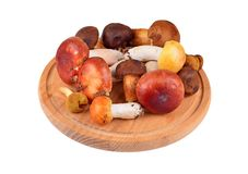 Boletus edulis mushroom on wooden board Stock Images