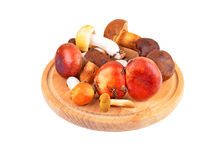 Boletus edulis mushroom on wooden board Stock Photography