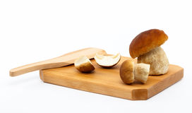 Boletus edulis mushrooms on cutting board - isolat. Boletus edulis mushrooms on wood cutting board and white isolated background, with wood food chopper royalty free stock image
