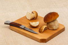 Boletus edulis mushrooms on cutting board Stock Image