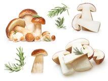 Boletus Edulis mushrooms isolated Royalty Free Stock Images