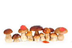 Boletus Edulis mushrooms Royalty Free Stock Photo