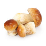 Boletus Edulis mushrooms Stock Photo