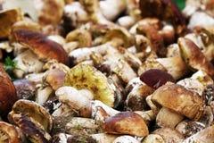 Boletus edulis mushrooms. Pile of fresh boletus edulis mushrooms for sale on market stall Stock Photos