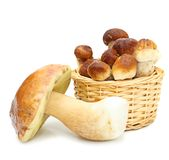 Boletus Edulis mushrooms in straw basket Royalty Free Stock Photo