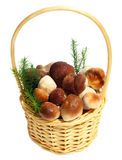 Boletus Edulis mushrooms in straw basket Royalty Free Stock Photos