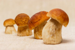 Boletus edulis mushrooms on table cloth. Boletus edulis mushrooms on rustic table cloth royalty free stock image