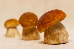 Boletus edulis mushrooms on table cloth Royalty Free Stock Photos